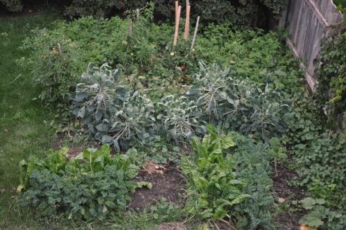 Rachel's smaller garden